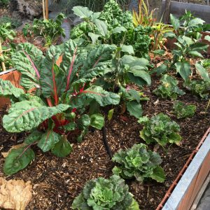 No-Dig-Gardening oder Gärtnern ohne umzugraben